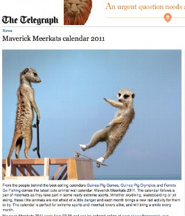 Meerkats Calendar 2011 in The Telegraph